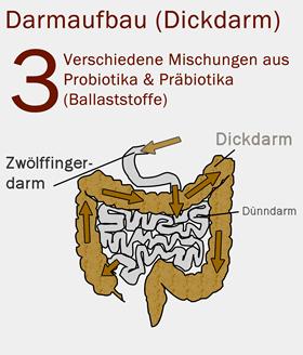 Darmaufbaukur nach Antibiotikum: Darmfloraaufbau mit 9 Prä- & Probiotika