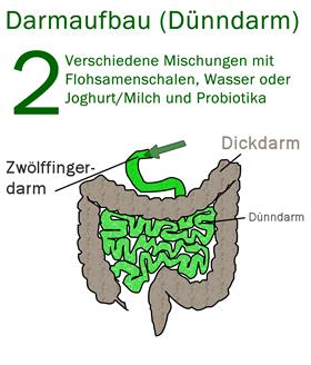 dickdarmflora
